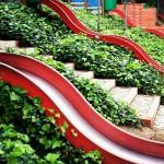 Snails, Science & Slides
